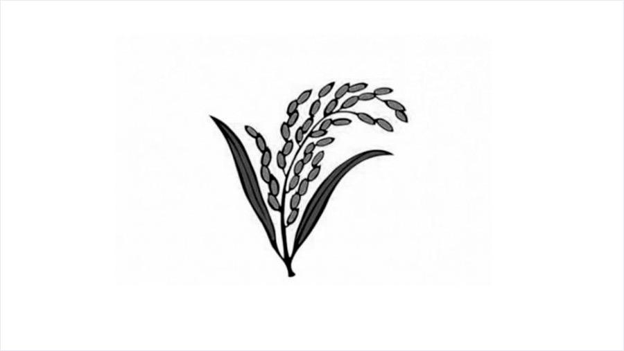 'ধানের শীষ' প্রতীক নিয়ে লড়বে জাতীয় ঐক্যফ্রন্ট